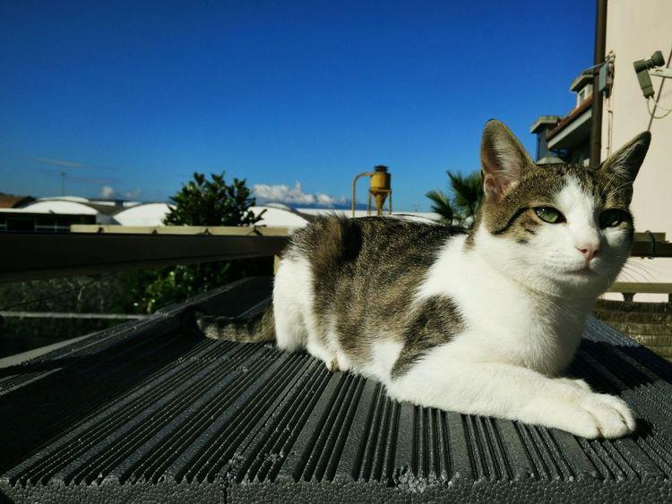 Cat ♡ Love EyeEm Best Shots EyeEm Cats Lover