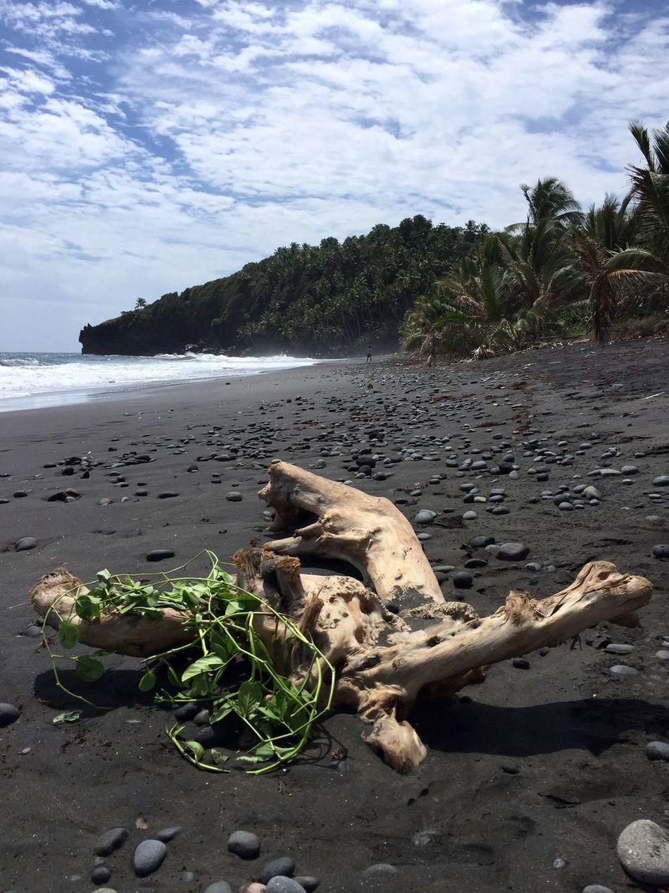 Beach Black Beach Sand Water Tree Driftwood No People Caribbean Island Nature Sea Coastline