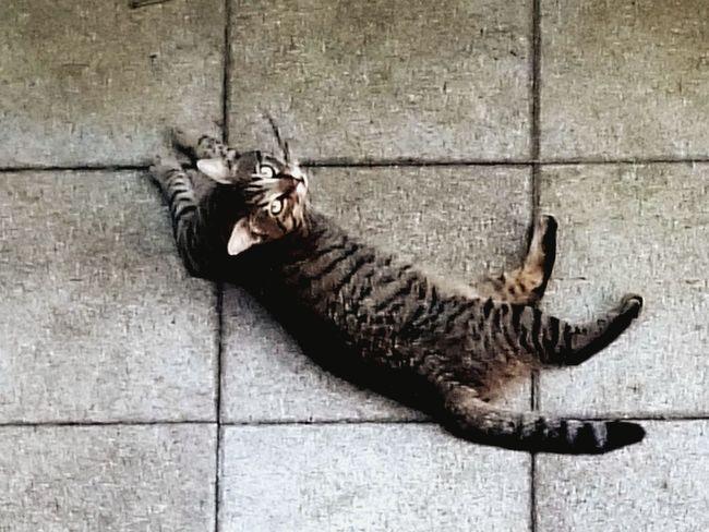 Cat Neighborhood Lazy Day Summer2015 Don't Disturb Me