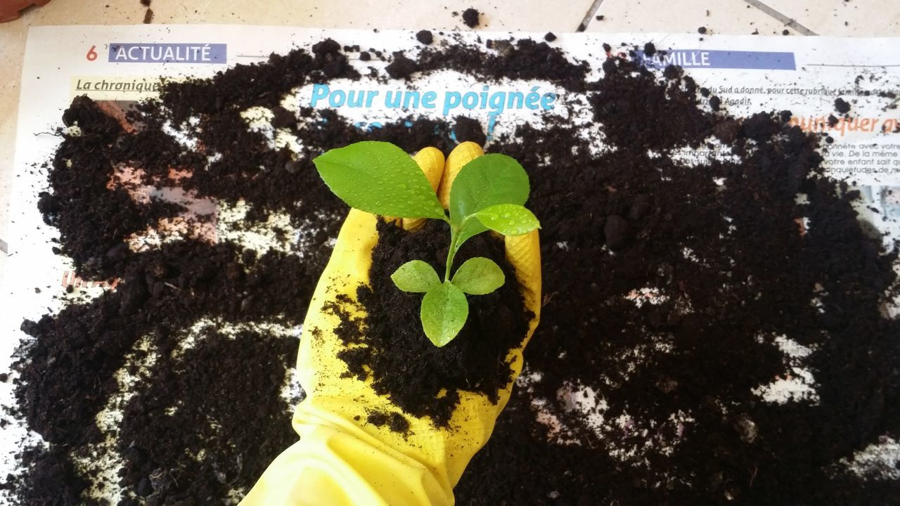 Break The Mold Green Color Yellow Day Leaf Outdoors One Person Nature Close-up People Human Hand Recycling Recycle Art Technology Recycled EyeEmNewHere Sustainable Newspaper News Pour Une Poignée Journal Actualite Planting Seeds Planting Trees Planting