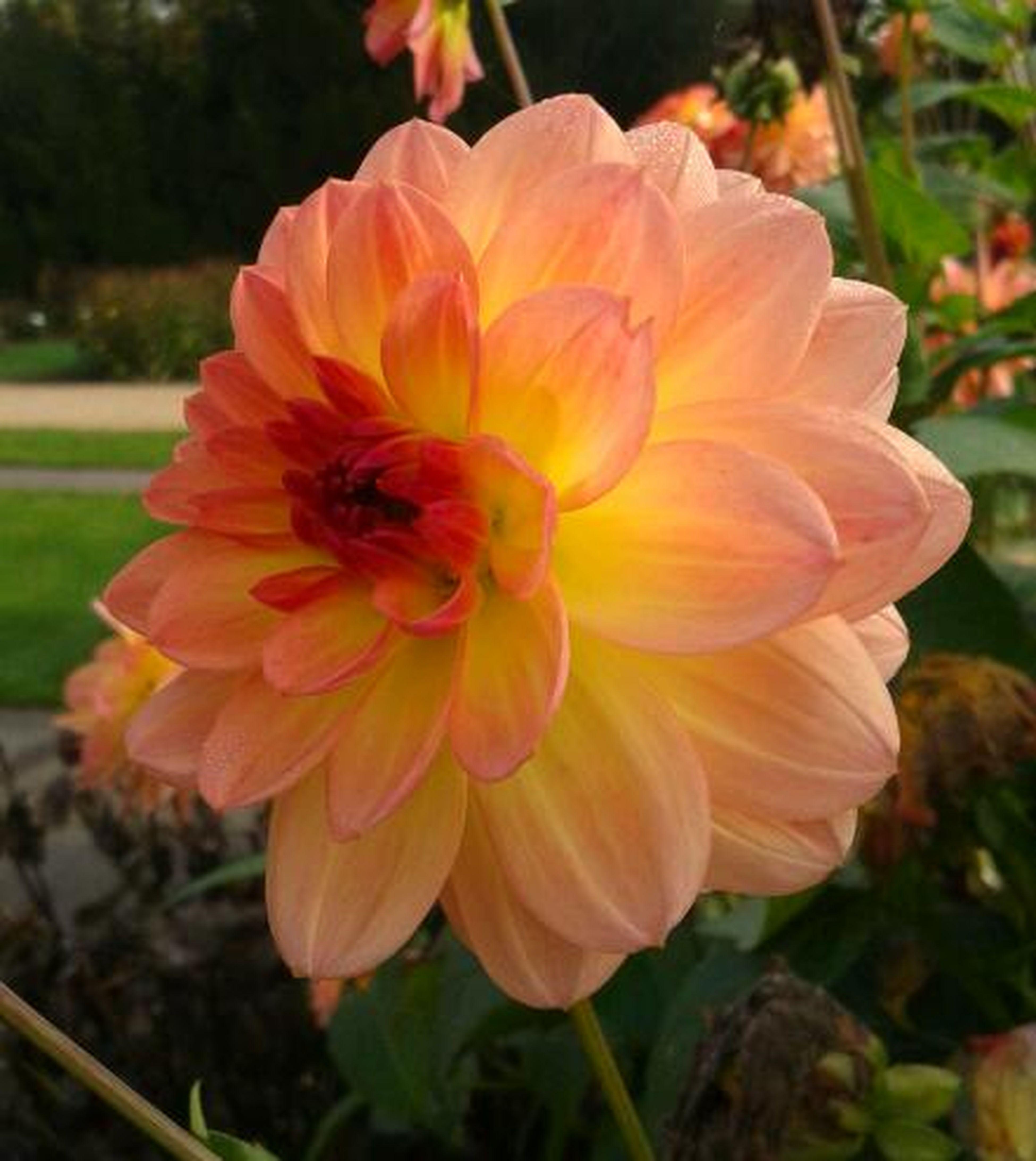 Flower Collection In Schloss Dycklieower