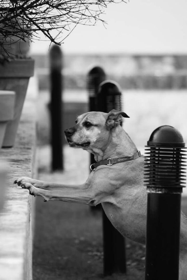 Curiosity killed the..dog Goodvibes Capturing Freedom Freedom Lovethisdog Mydog Africa Truelove