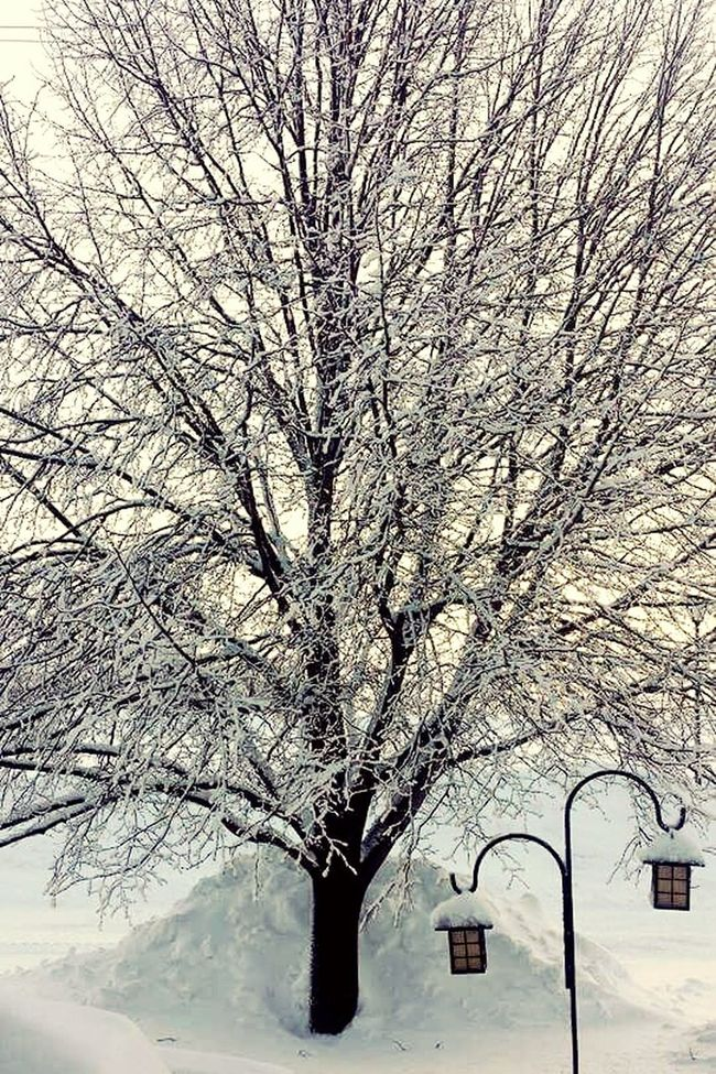 Wintertime Frosted Trees Snow ❄ Minnesota Snowbank Cold Lanterns Plymouth Minnesota