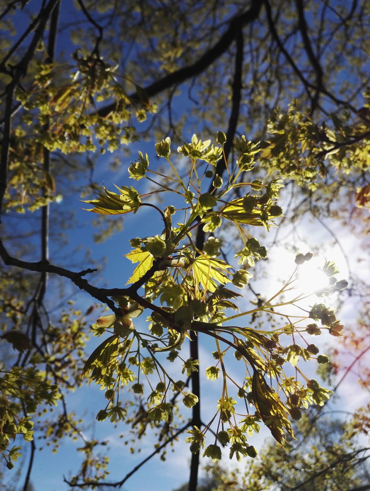 Tree Nature Beauty In Nature Low Angle View Day Outdoors Leaf Springtime Sky Fragility Freshness Close-up Sunlight