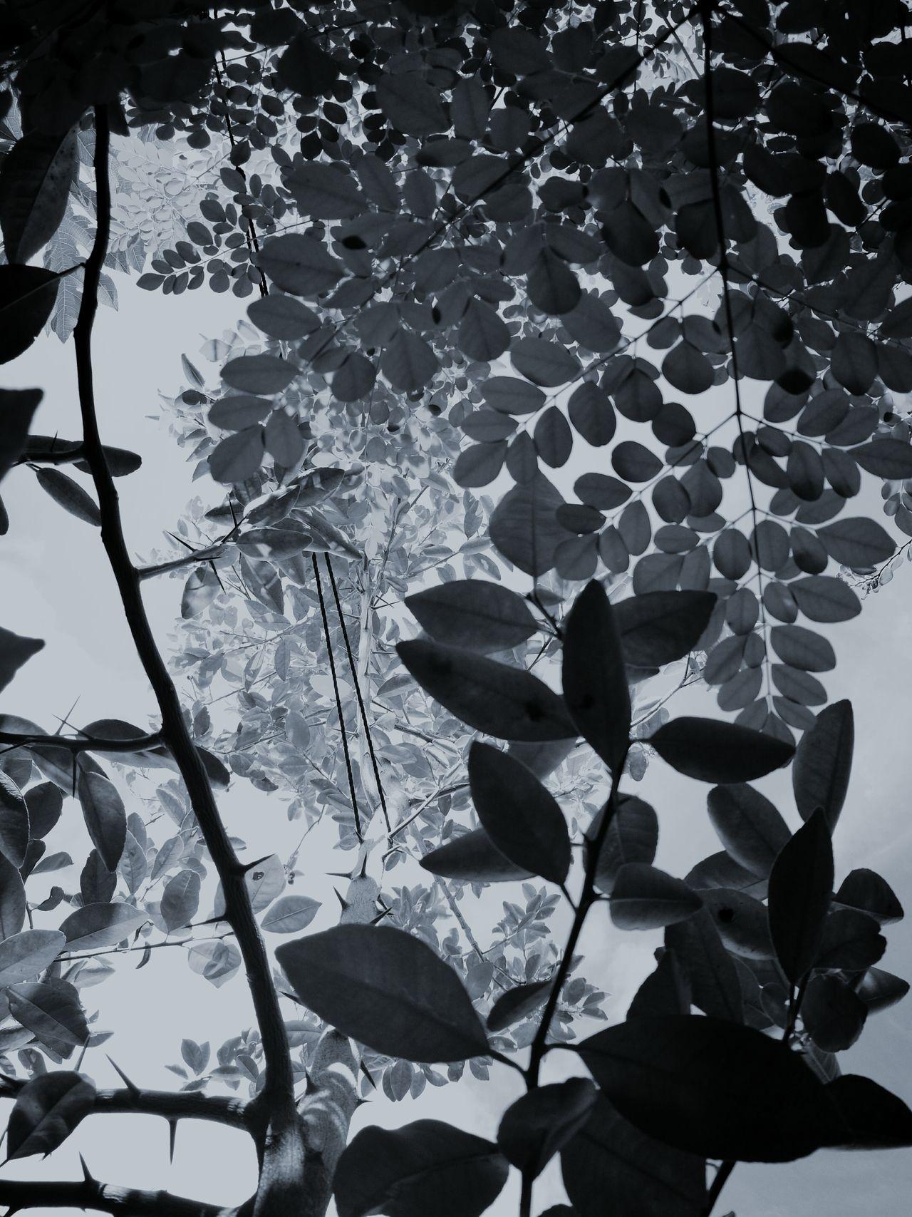 Freshness Branch First Eyeem Photo Black & White Foliage, Vegetation, Plants, Green, Leaves, Leafage, Undergrowth, Underbrush, Plant Life, Flora