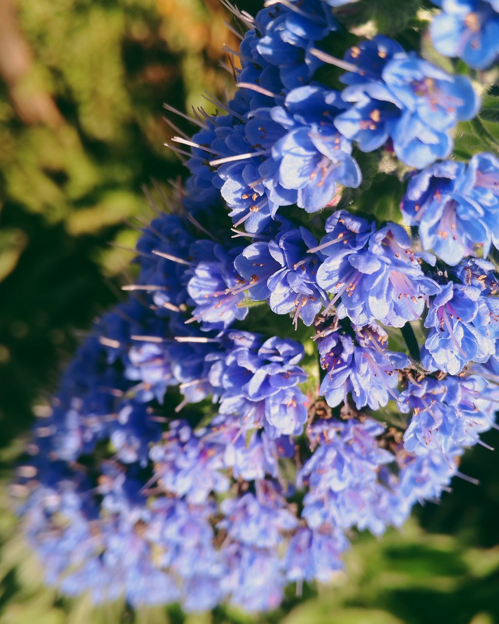 flower, purple, selective focus, nature, beauty in nature, growth, fragility, scented, outdoors, plant, close-up, freshness, day, no people