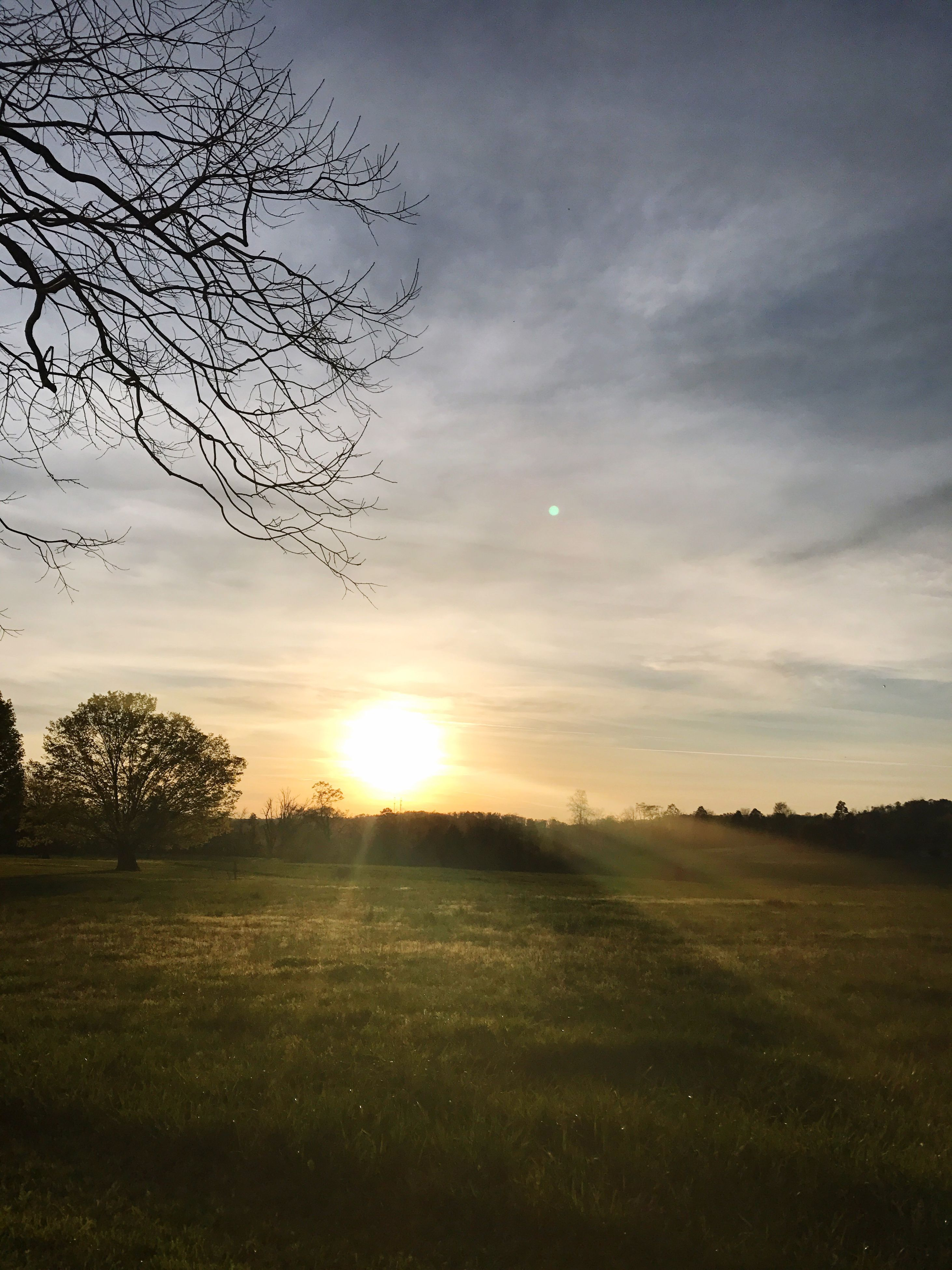 sunset, nature, beauty in nature, sky, no people, tranquility, field, outdoors, tree, day