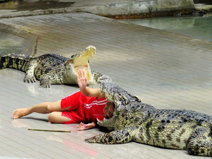 Women Who Inspire You Bangkok Life Taking Stunt Crocs Hats Off Crocodile