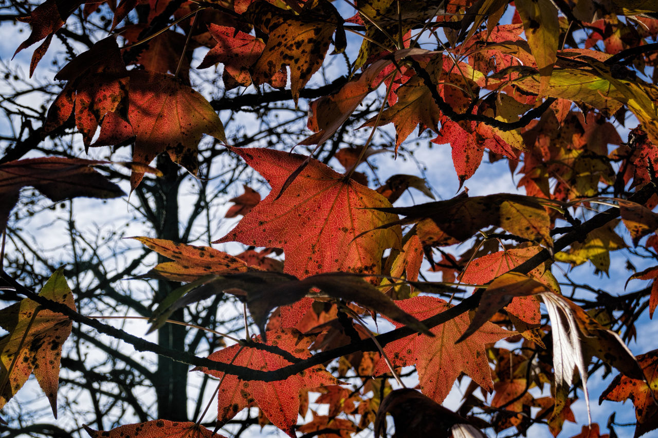 Autumn Autumn Colors Beauty In Nature Branch Foliage, Vegetation, Plants, Green, Leaves, Leafage, Undergrowth, Underbrush, Plant Life, Flora Leaf Vein Leafs Nature Photography Orange Color Tree