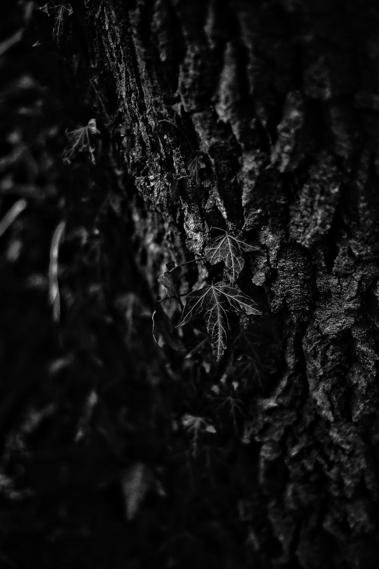 Sonya58 First Eyeem Photo Bokeh Forest Blackandwhite Photography Blackandwhite Trees Mysthical Sony A58 Alpha58 Shady