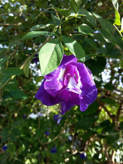 Call me beauty! 😘 Flower Nature Beauty In Nature Purple Leaf Plant Freshness No People Outdoors Petal Growth Day Scented Tree Green Color Fragility Close-up Flower Head Branch Growth