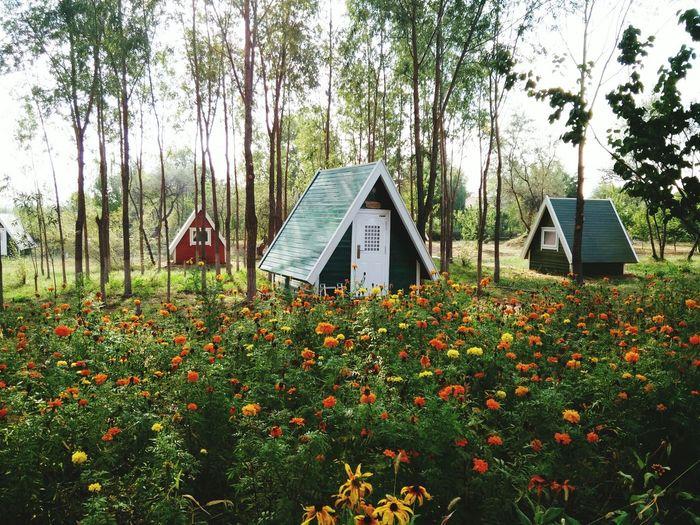 Mini House garden Coloured Houses Little Cabin In The Woods
