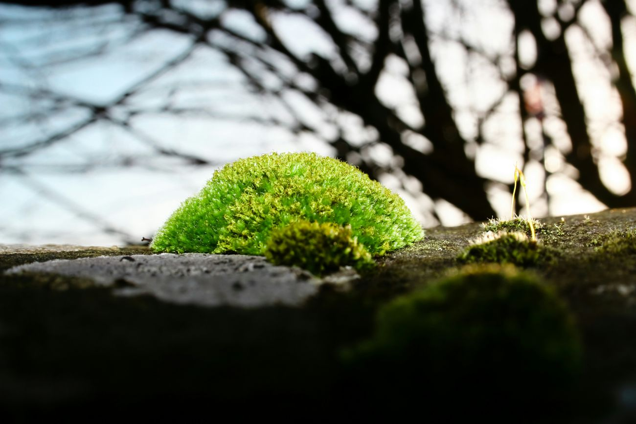 Derry, London Derry. Moss. Landscape Relaxing Check This Out Derrylondonderry Ireland Ireland🍀 Abstract Creative