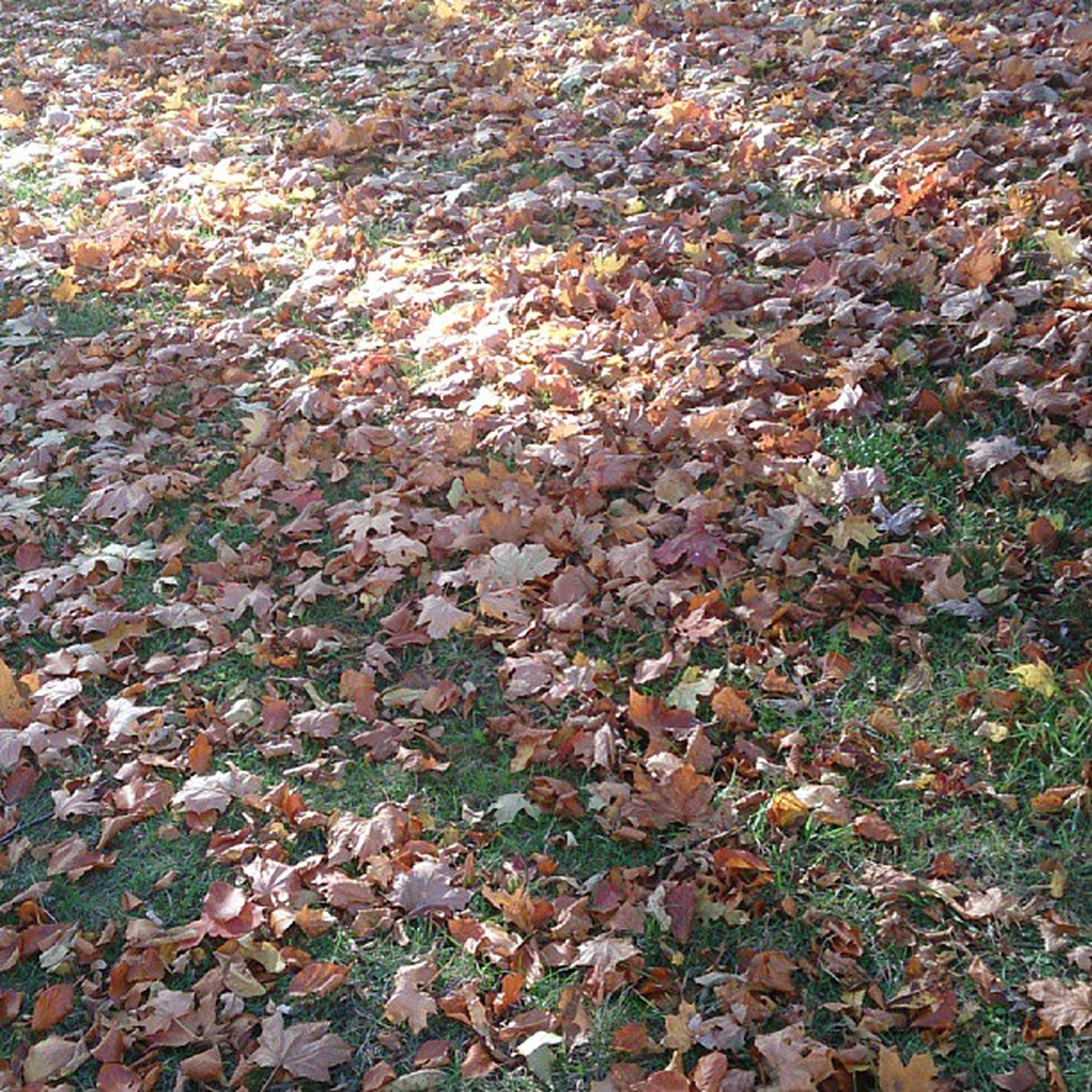 autumn, change, season, leaf, full frame, high angle view, backgrounds, leaves, nature, fallen, tranquility, abundance, dry, field, day, beauty in nature, outdoors, no people, falling, orange color