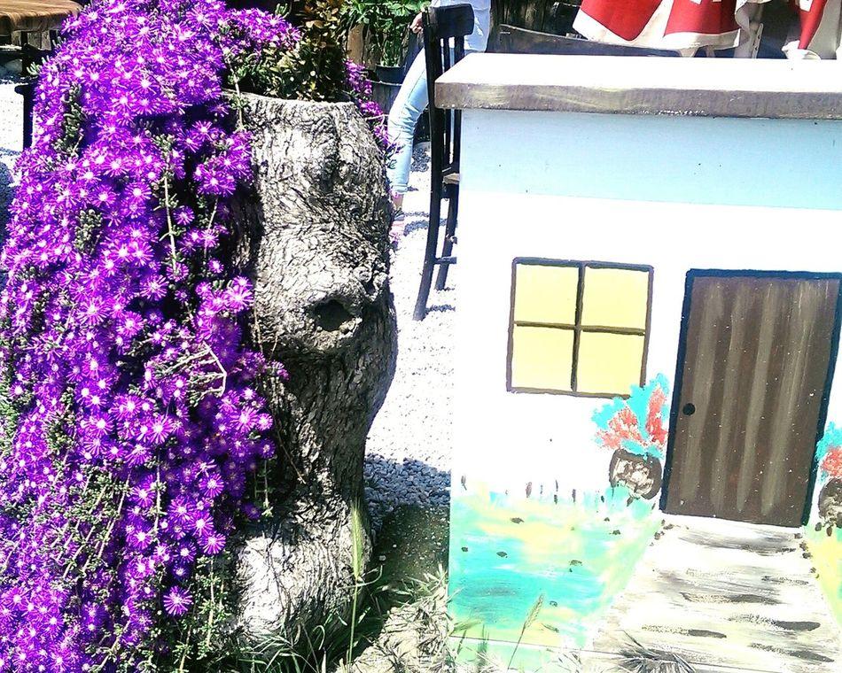 Enjoying The Sun Springtime Fresh Air Summer ☀ Spring Flowers Spring Colours 🌸🌴🌅🌼💮🍃