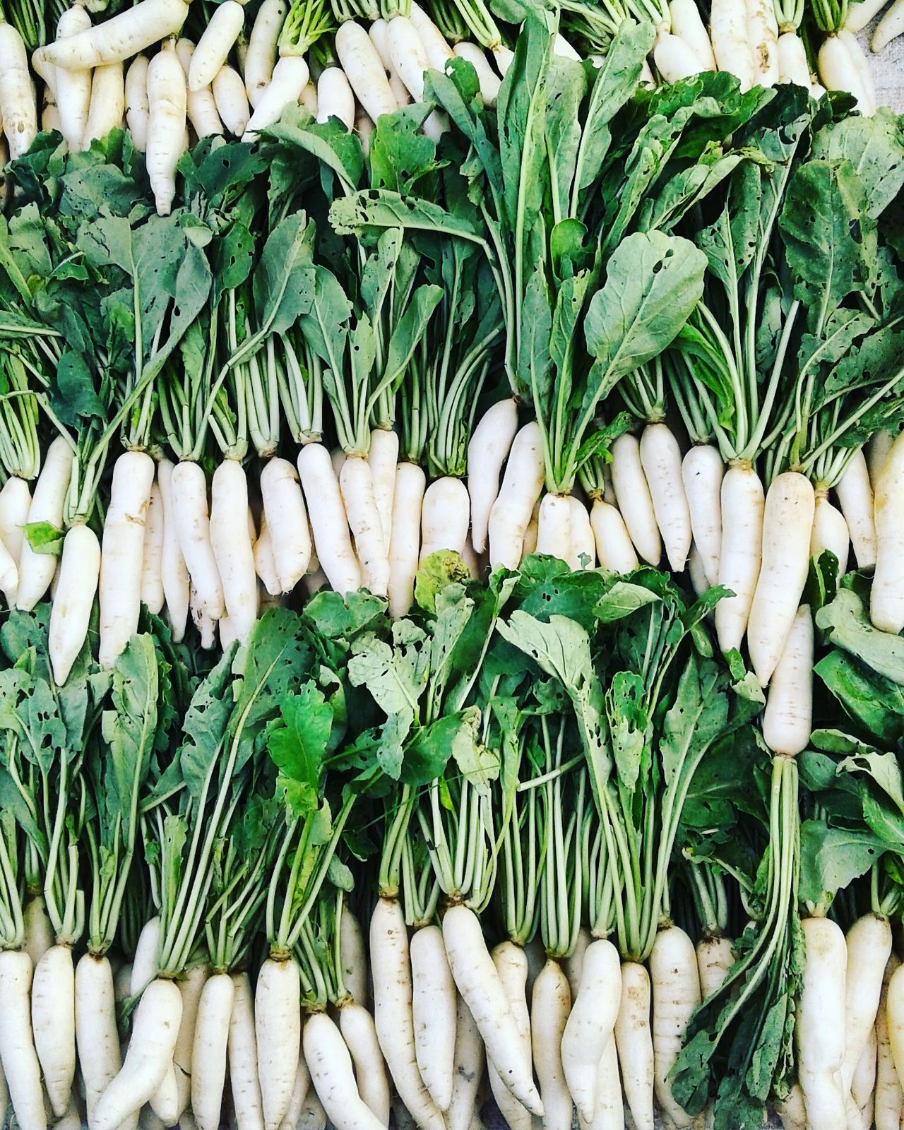 White Radish In Market Linear Perspective Algorithm Make Your Frame Vegetable Images