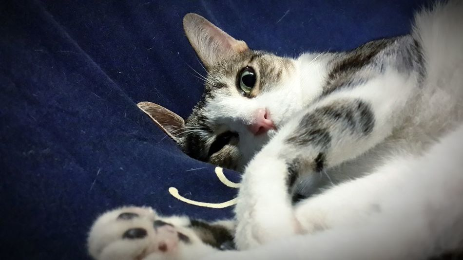 I Love Cats I Love My Cat Cat Watching Samsung Galaxy S4 My Cat Cat Cat Sleeping