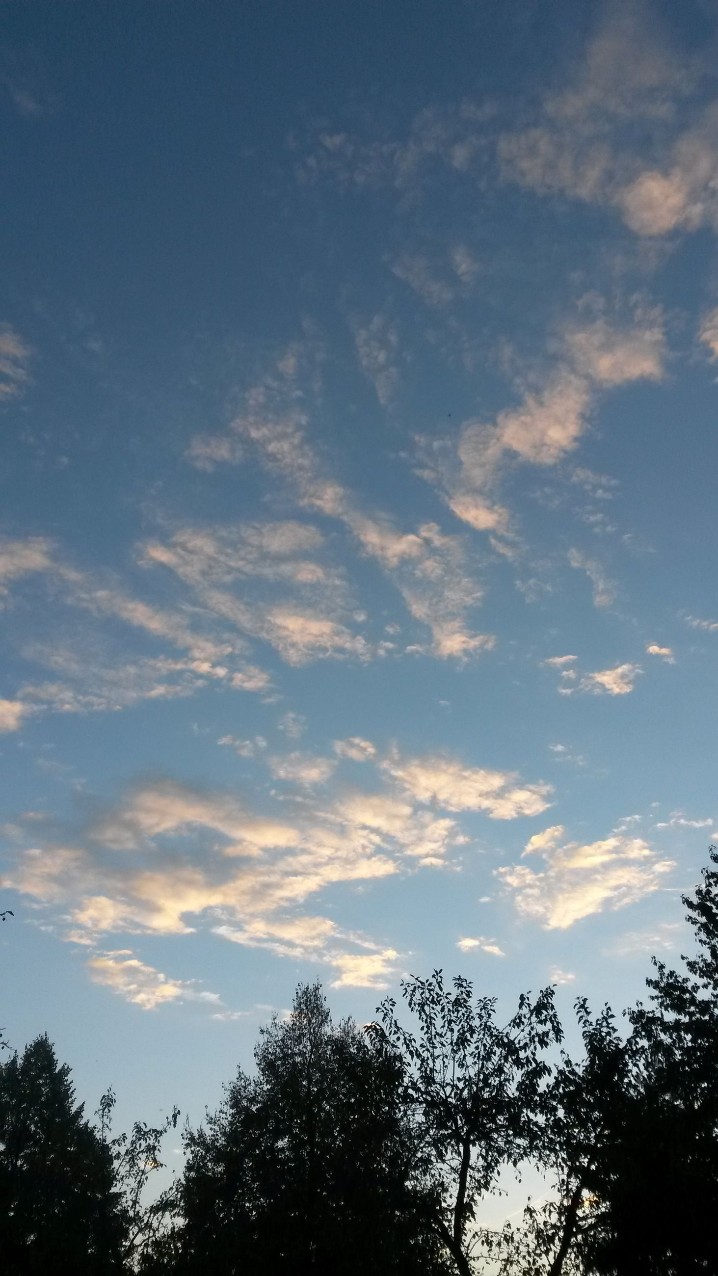 sky, tree, low angle view, tranquility, cloud - sky, beauty in nature, tranquil scene, scenics, cloud, nature, blue, cloudy, growth, idyllic, outdoors, no people, day, branch, silhouette, sunlight