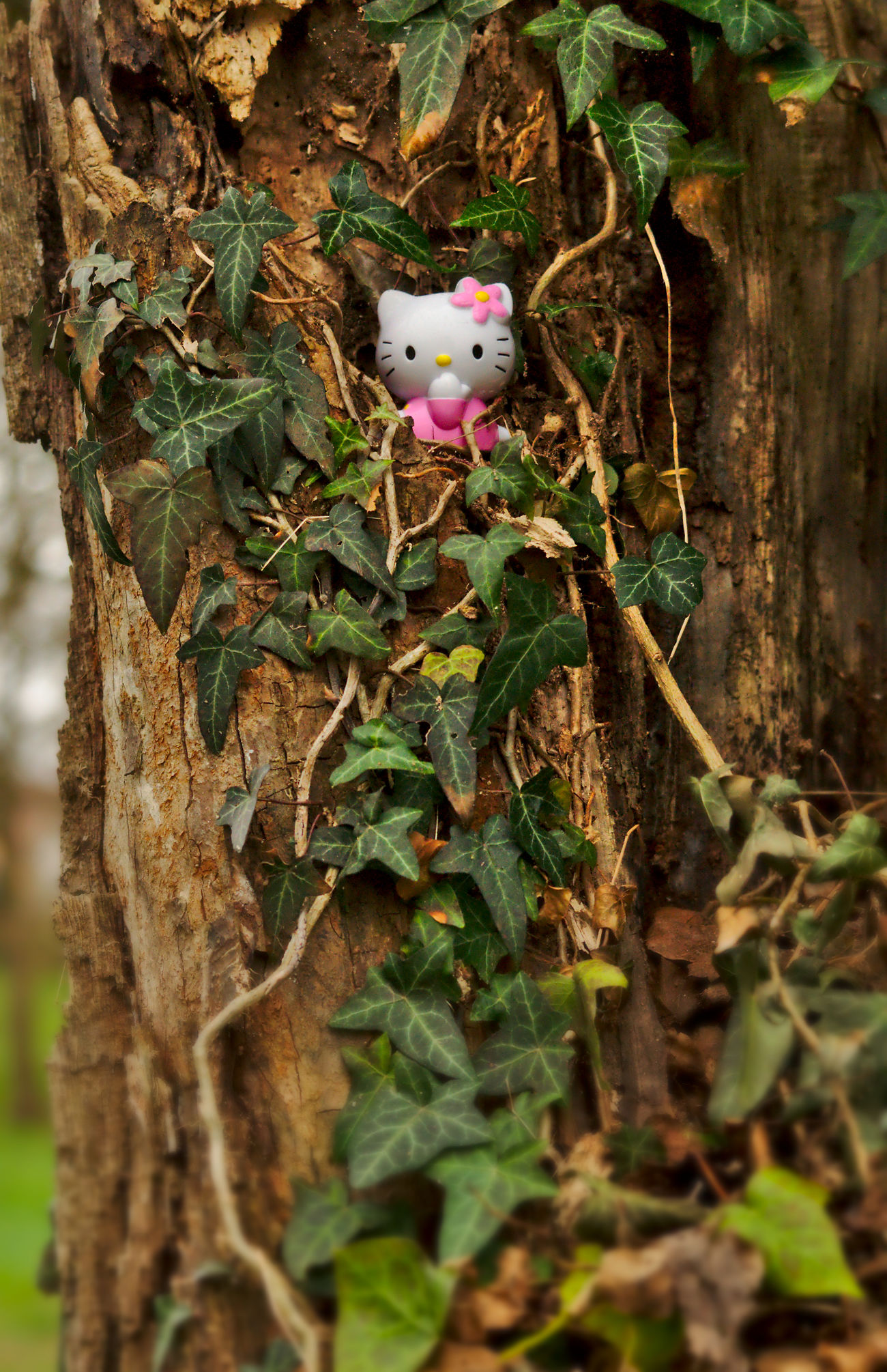 Hello Kitty in the trees Brown Fantasy Figure Green Hello Kitty Ivy Leaf Light And Shadow Loneliness Lost Low Angle View Nature Nikon Old Tree Outdoors Pink Pink Color Telling Stories Differently Toy Toy Adventures Tree Wilderness Wood ハローキティ Millennial Pink The Secret Spaces