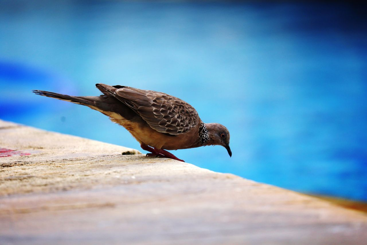 Close-Up Of Bird Perching Against Sky