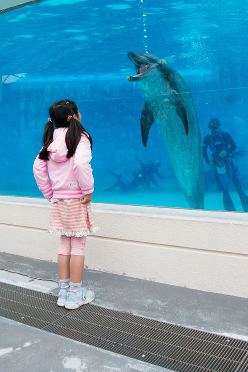 Nice to meet you. Animal Themes Aquarium Blue Childhood Diving Dolphin Dolphins Good Morning Nice To Meet You Okinawa Outdoors Standing Swimming Pool Water