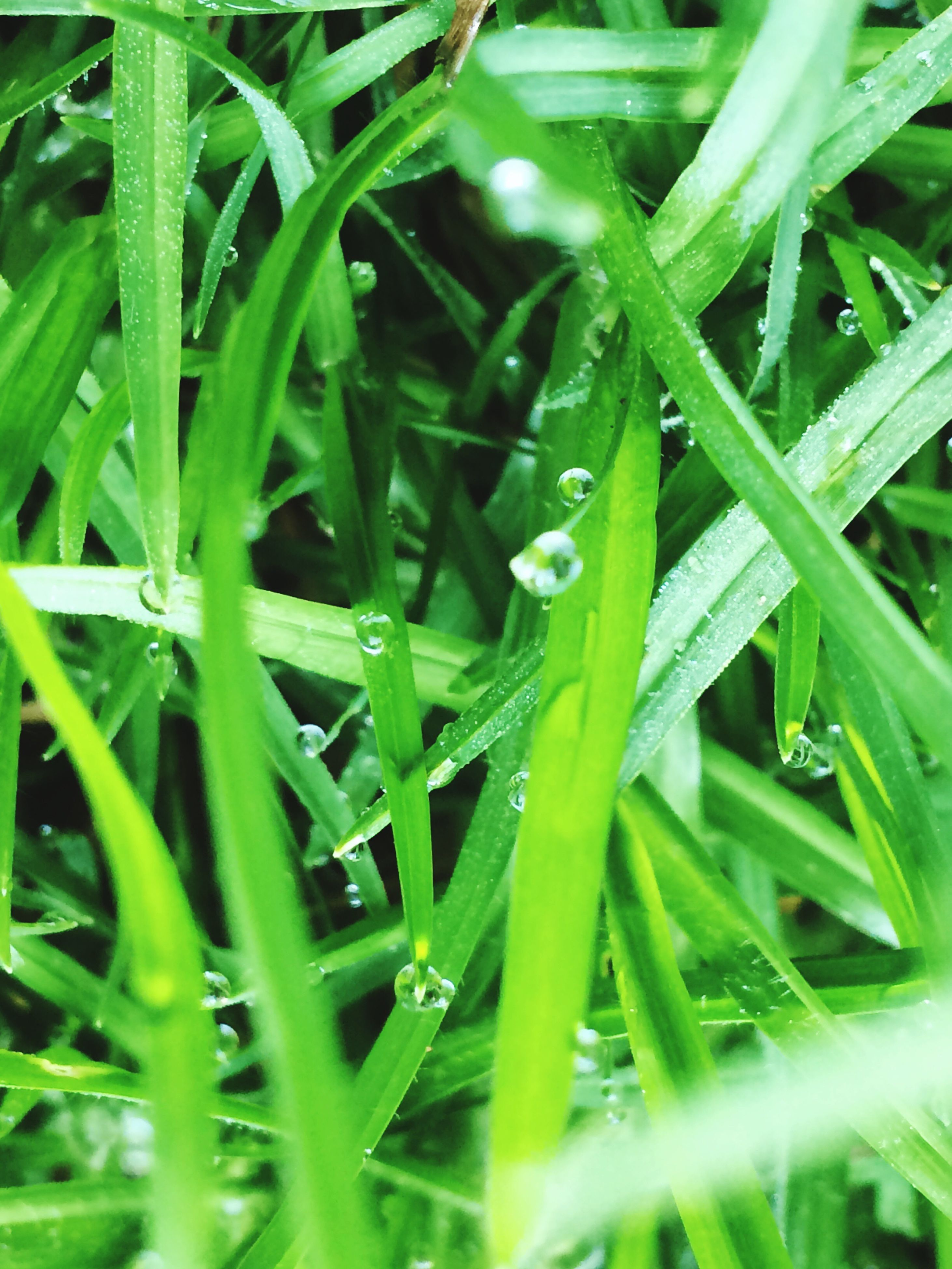green color, growth, nature, drop, wet, plant, dew, grass, leaf, close-up, no people, blade of grass, outdoors, beauty in nature, full frame, water, day, raindrop, fragility, freshness