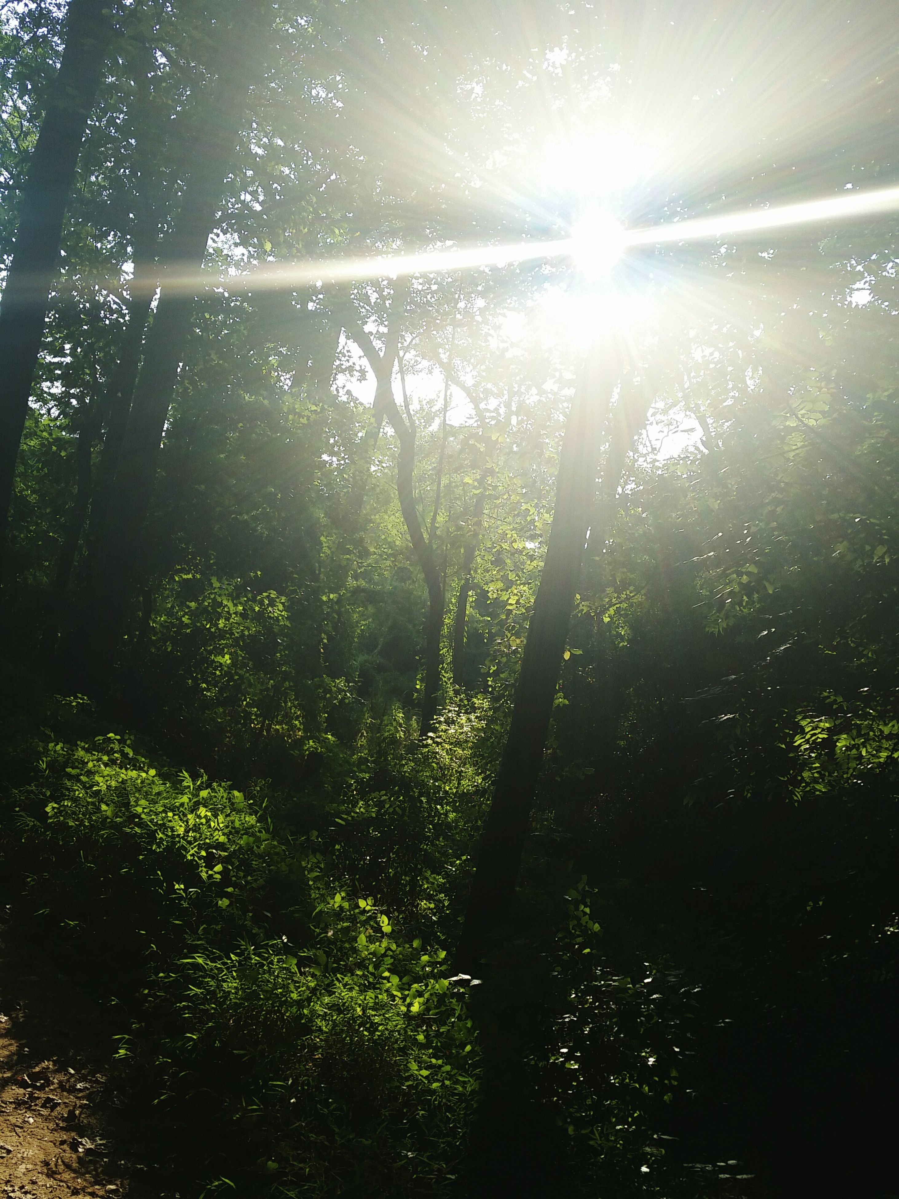 sunbeam, sun, tree, sunlight, lens flare, tranquility, growth, beauty in nature, nature, tranquil scene, scenics, sunny, forest, bright, green color, day, plant, idyllic, non-urban scene, tree trunk, no people, outdoors, back lit, shiny, landscape, sky, grass, woodland, remote, growing, non urban scene, lush foliage, brightly lit