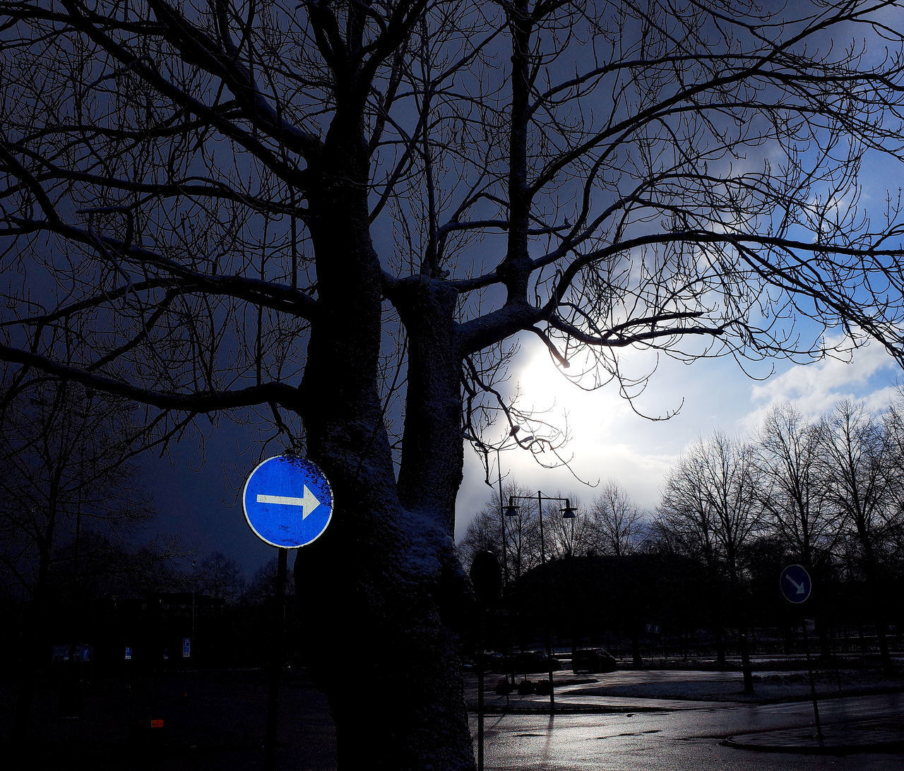 bare tree, tree, branch, night, nature, winter, no people, outdoors, sky, silhouette, cold temperature, moon, beauty in nature, illuminated, road sign