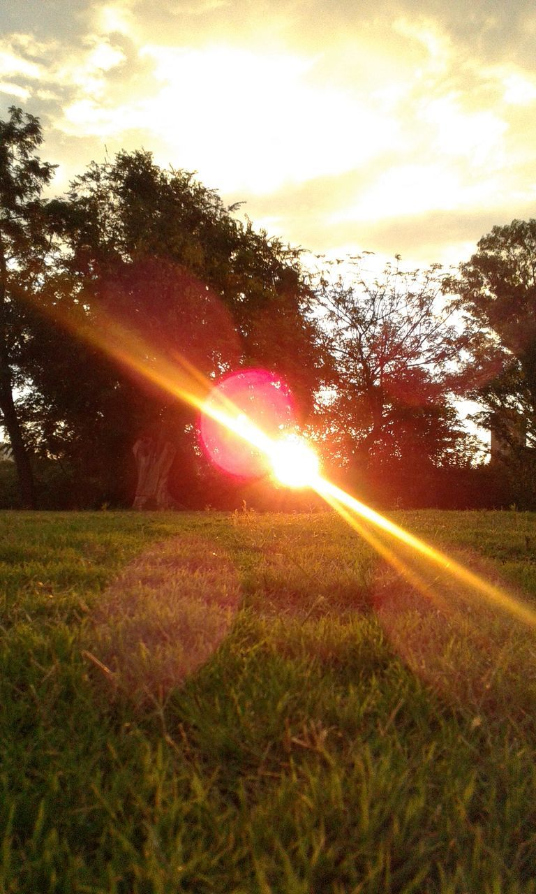 lens flare, sunbeam, nature, sun, growth, sunset, grass, beauty in nature, sunlight, tree, idyllic, field, outdoors, tranquility, scenics, sprinkler, tranquil scene, sky, landscape, plant, no people, day, irrigation equipment