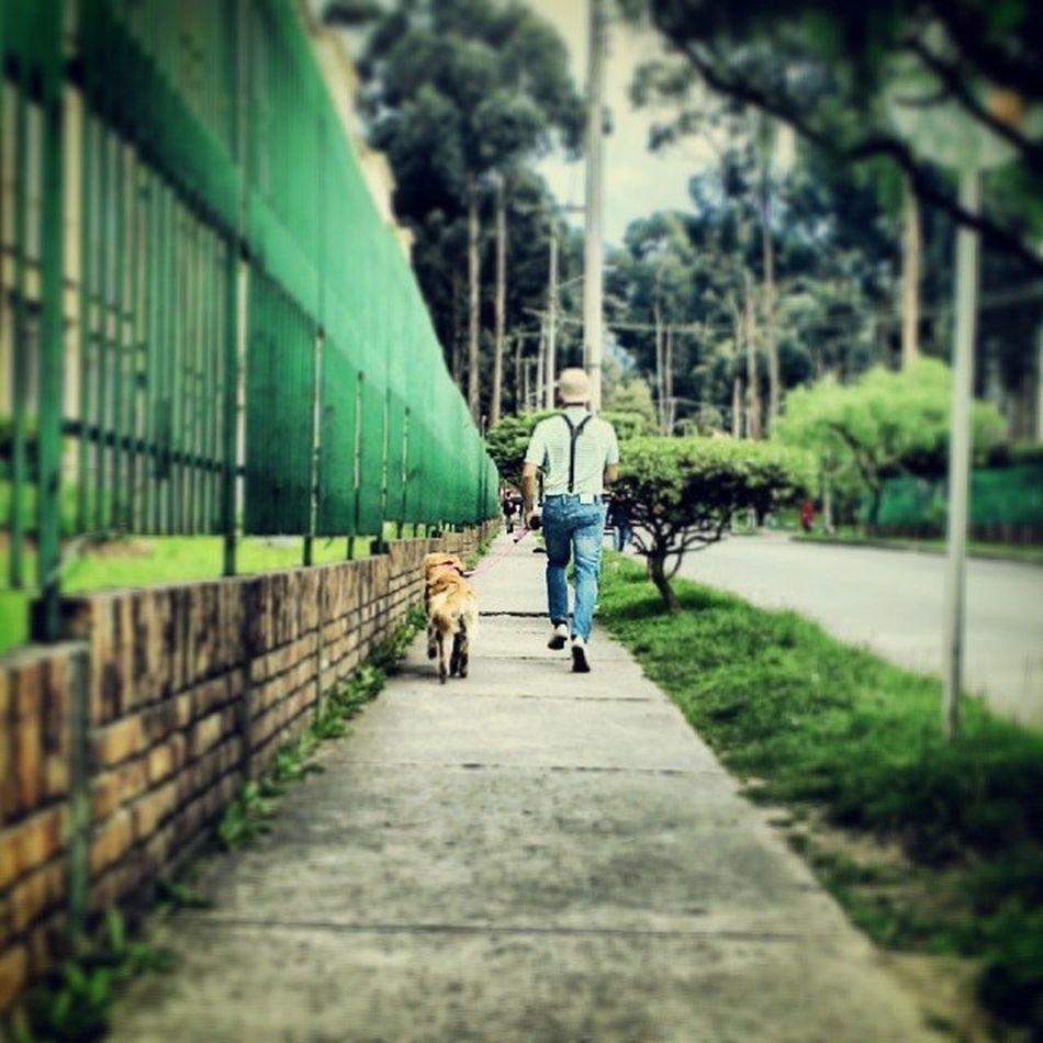 Caminanding