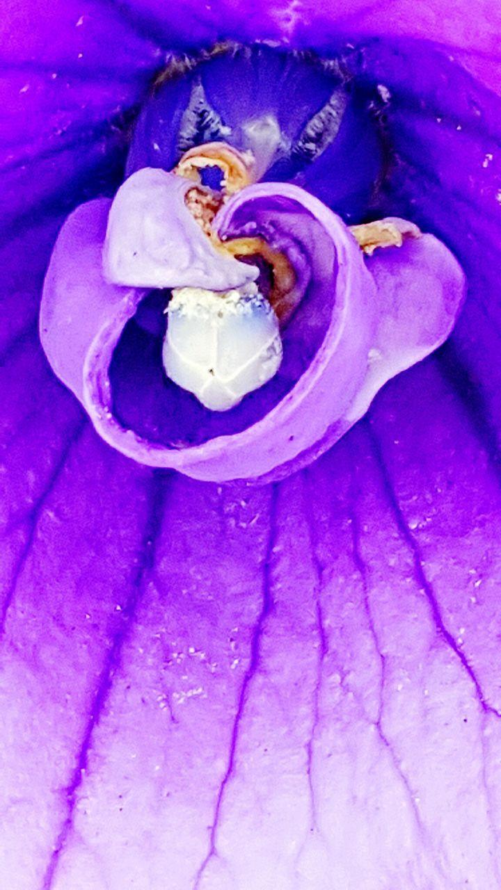 Macro Shot Of Purple Orchid