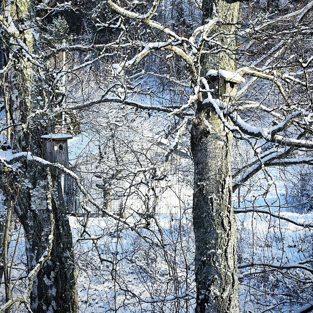 Winter in the garden. Winter Nature_collection Nature Snow Birdhouse In My Garden Winter Trees EyeEm Nature Lover Trees Deepfreeze