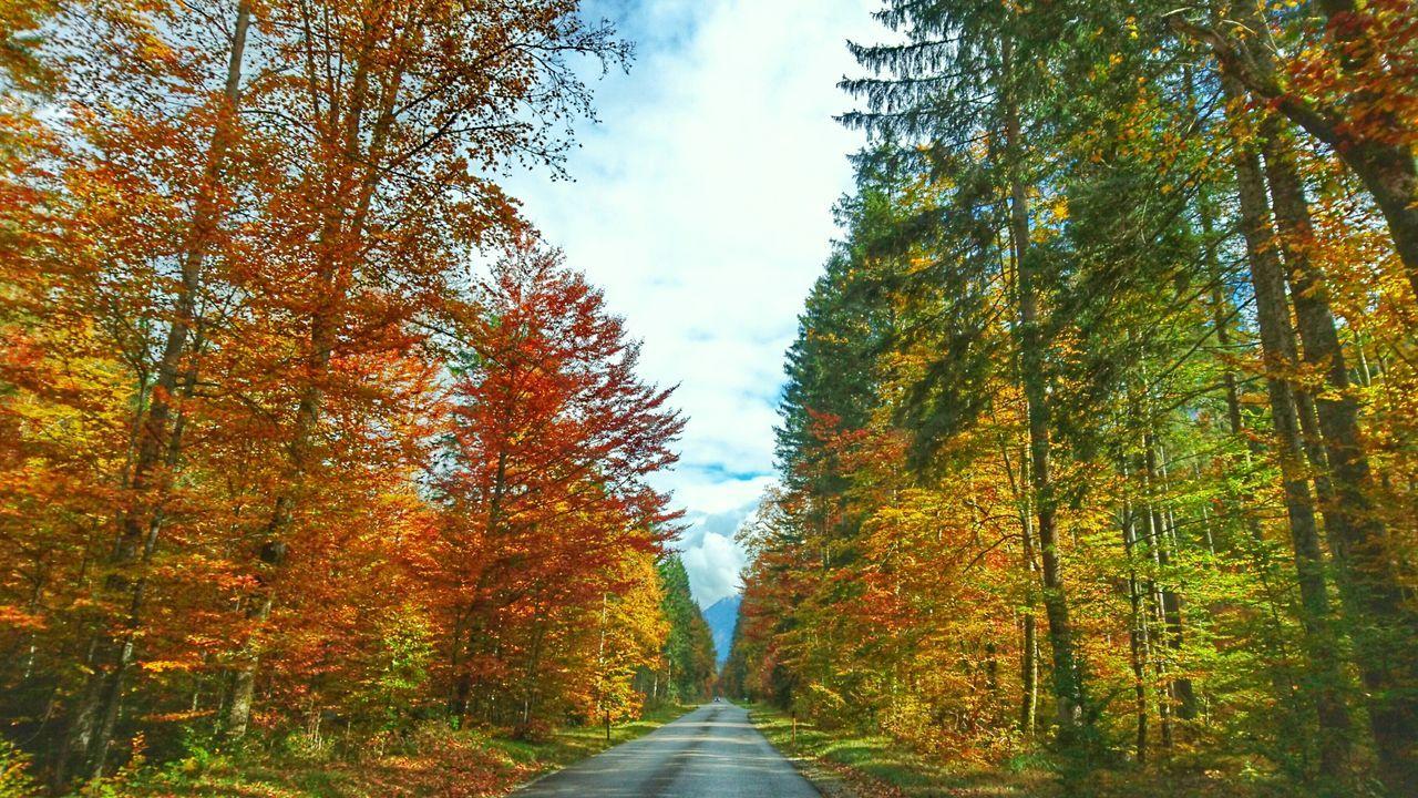 On The Road Roadtrip Autumn Trees Street Empty Streets Autumn Colors Taking Photos Sony Xperia Z3+