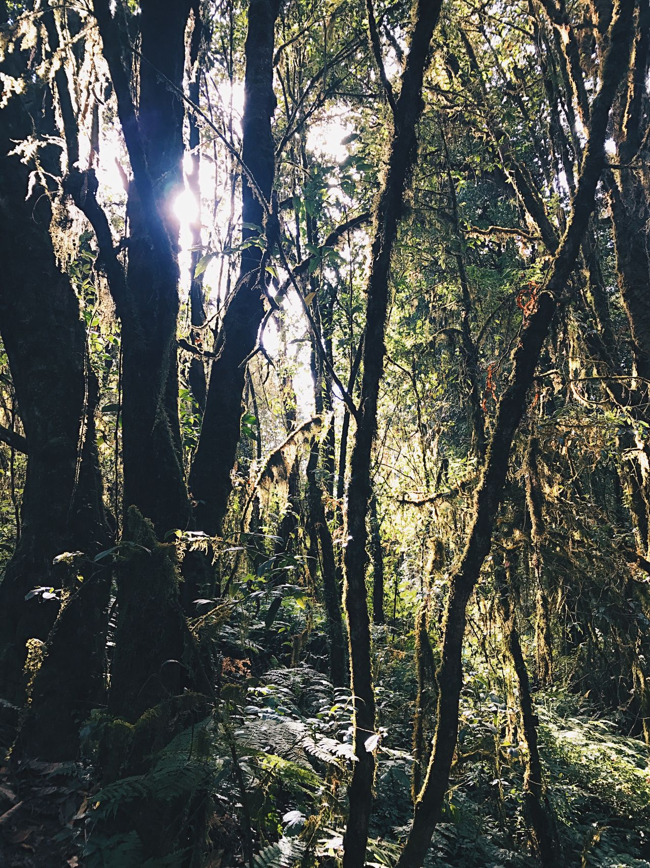Nature Light And Shadow Tree Forest Travel