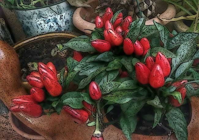 Red Hots😉🌶 ... TakeoverContrast Vegetable AMPt - Still Life (Nature Morte) Colors Of Autumn CreativePhotographer