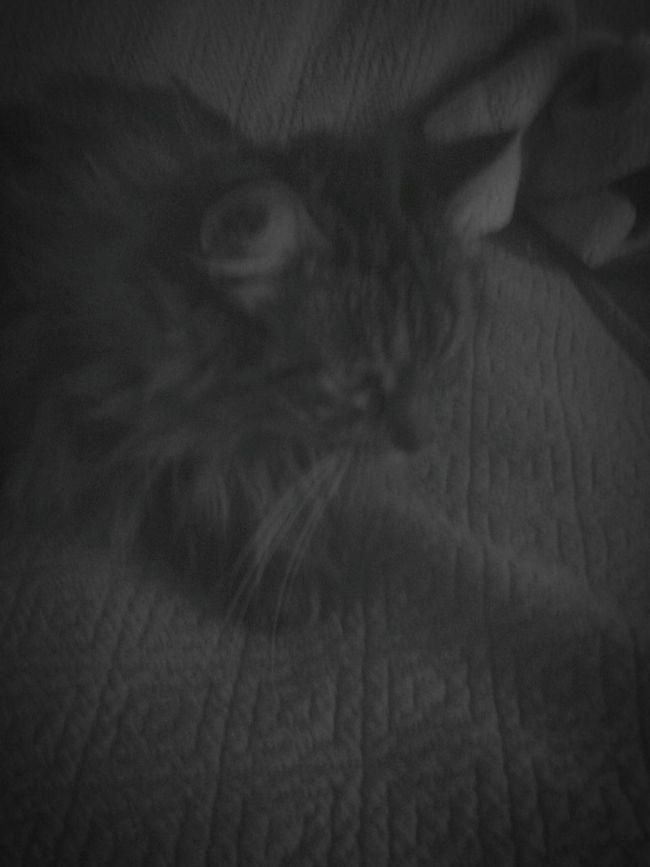 My Cat🐱🐈🐾😺😸😻😼🙀😹😾 I Love My Cat