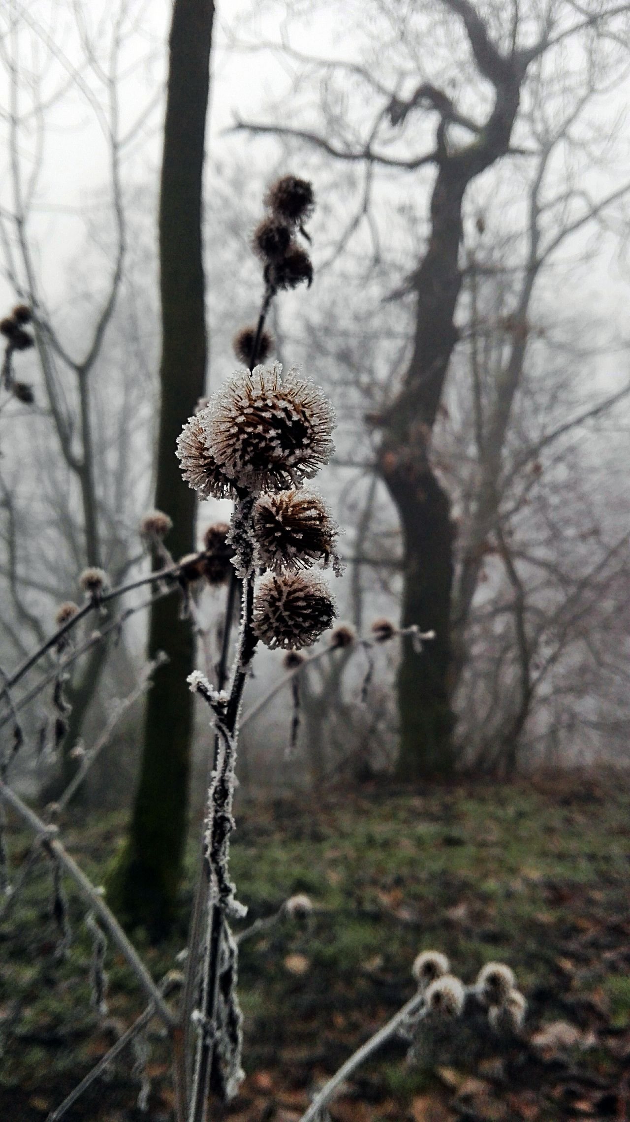Winter Wintertime Nature Beauty In Nature Cold Days Freezing Cold Forest Cold Morning Fog Foggy Morning Foggy Day Foggy Weather Mobile Photography Czech Nature in Rip Czech Republic