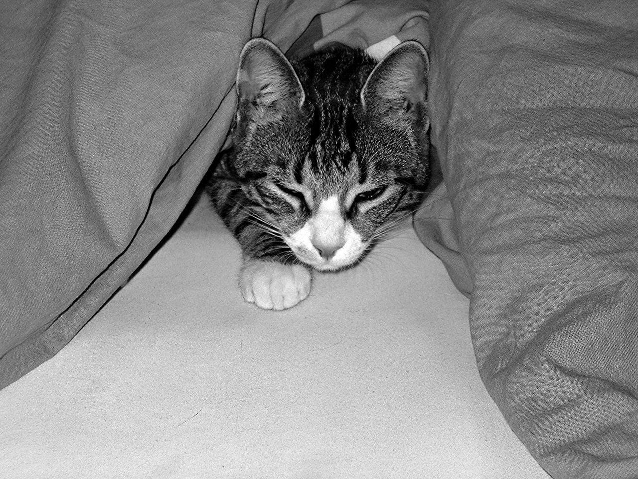 Babycats Cat Catlady Catlovers Cutecat Kittens Kitty Cat Smallcat Tiredcat