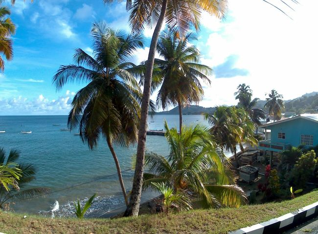 Countryside Life Tourist Destination Tobago Rural Scenes Fish-eye Lens Sun And Clouds Coconut Trees Rural Exploration Countryside Country Road Tobagolove Take Me There