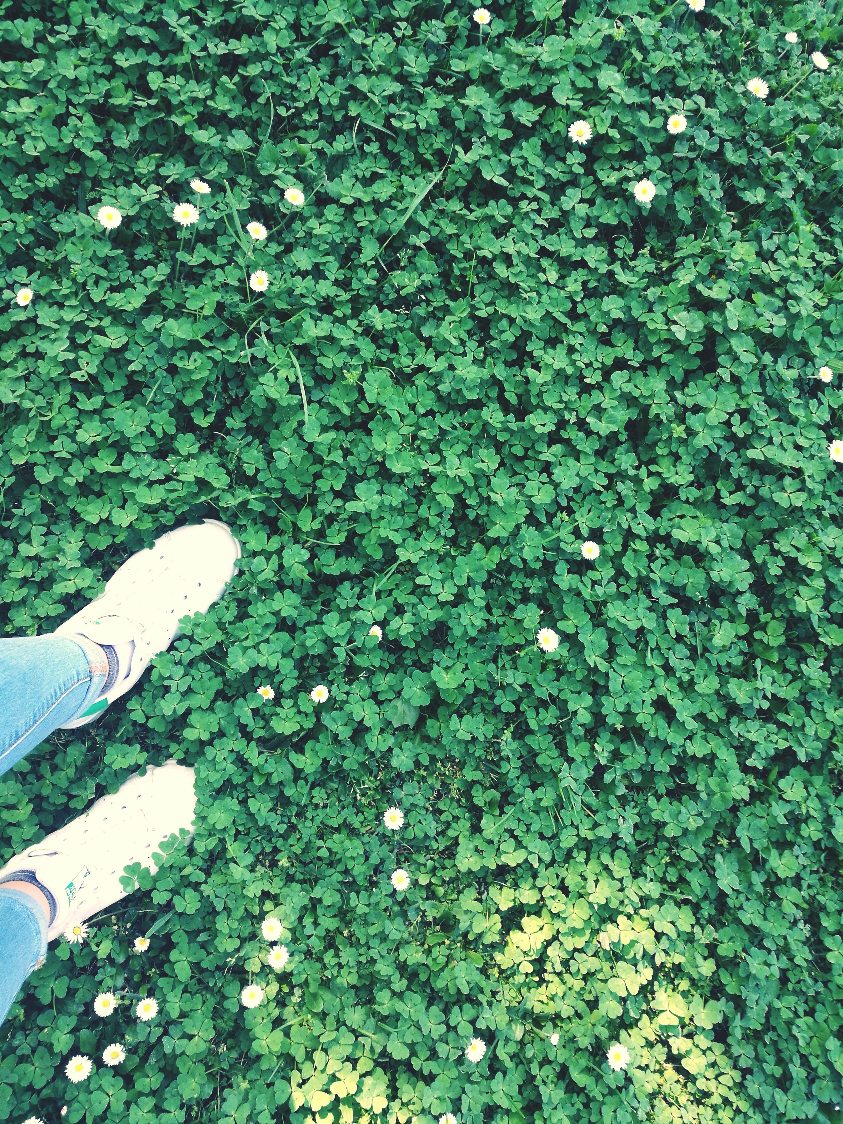 grass, green color, nature, growth, no people, day, beauty in nature, outdoors, fragility