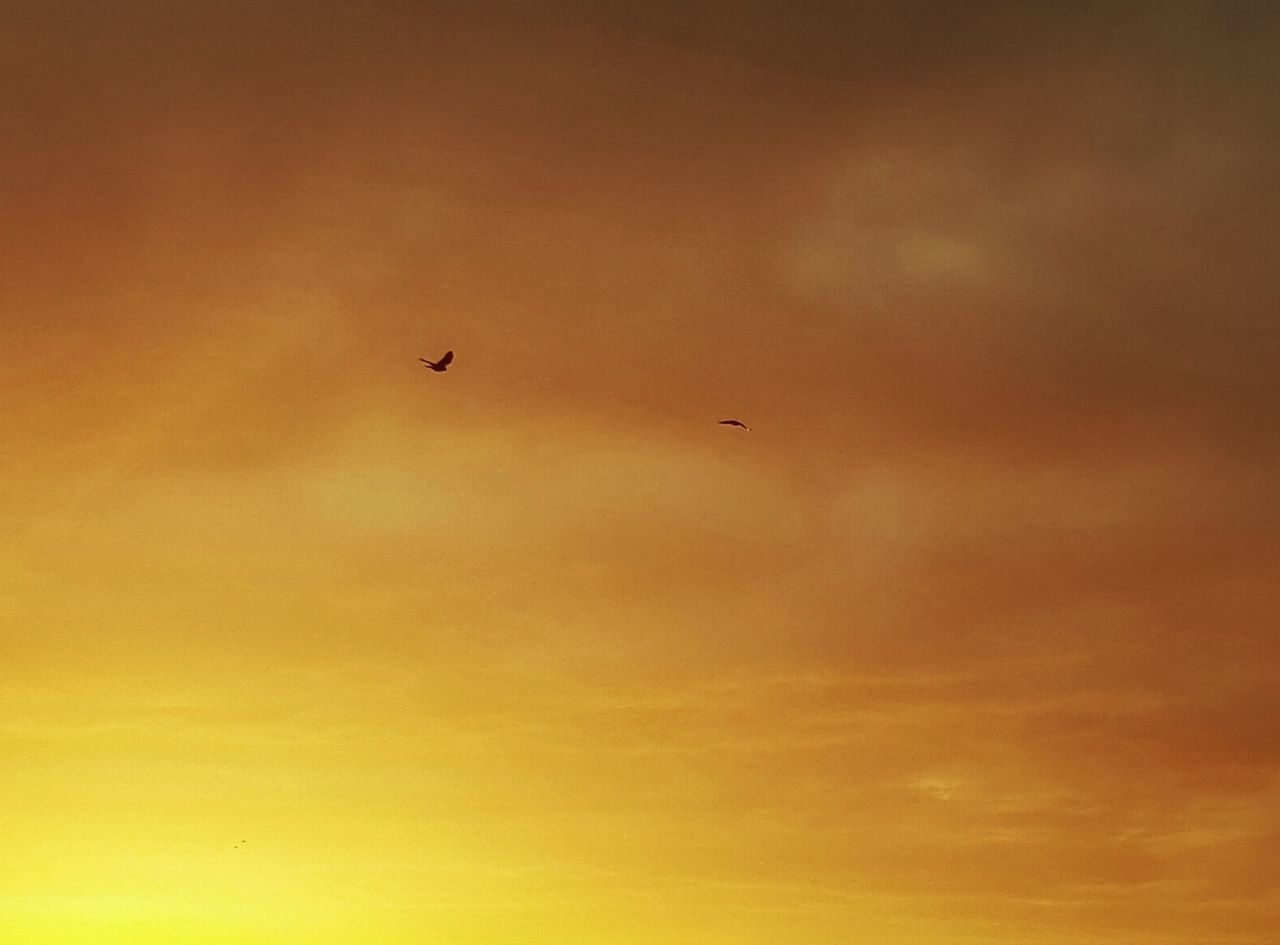 Airplane Animal Themes Animals In The Wild AntiM Beauty In Nature Bird Bird Flying High Birds Day Flying Low Angle View Melancholic Landscapes Nature No People Orange Outdoors Silhouette Sky Sky Orange Sunset Warmth Warmth Of The Sun
