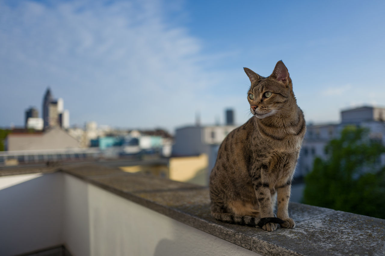 domestic cat, one animal, feline, animal themes, focus on foreground, domestic animals, day, built structure, outdoors, building exterior, mammal, pets, sky, architecture, no people, sitting, retaining wall, city, close-up