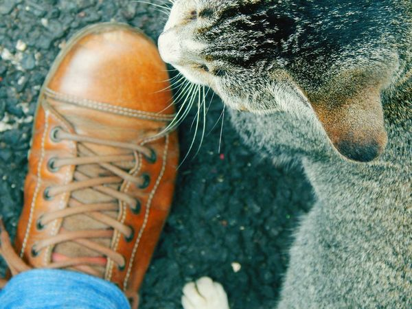 Peopleandplaces Color Of Technology Cat♡ Catlover ♡ Color Of Contrast Shoe Togetherness Domestic Cat Pets One Animal Animal Themes Cat Domestic Animals Mammal Whisker Feline Close-up Part Of Selective Focus Animal Nose Animal Head  Zoology Animal Outdoors Dramatic Angles Finding New Frontiers