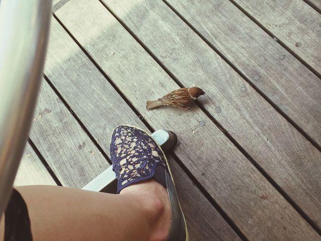 Hello my friend! Hello World Bird Bird Photography Sparrow Travelingfoot