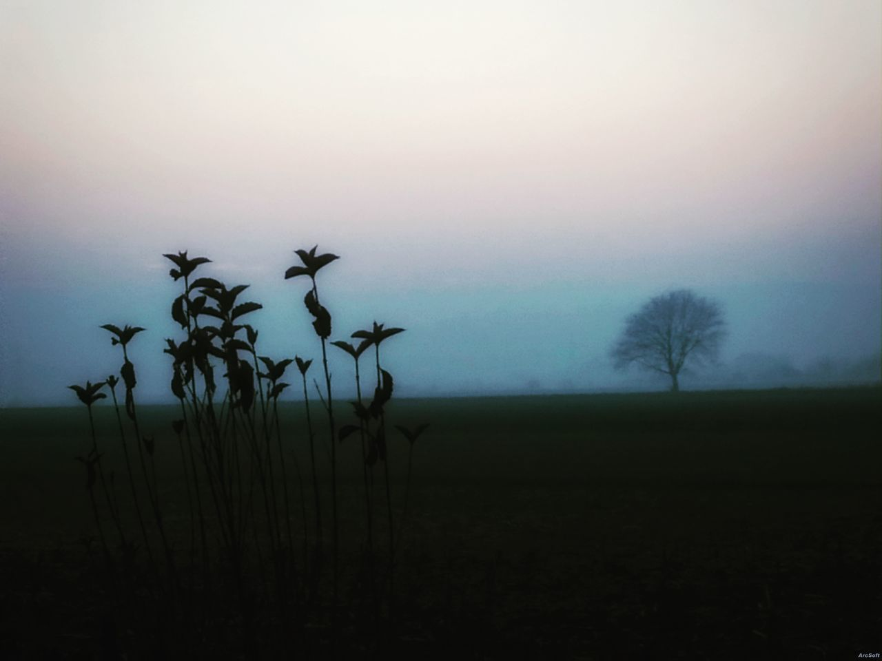 Nature Sky Tree No People Plant Tranquilidad Tranquility Tranquillità Nebbia Neblina
