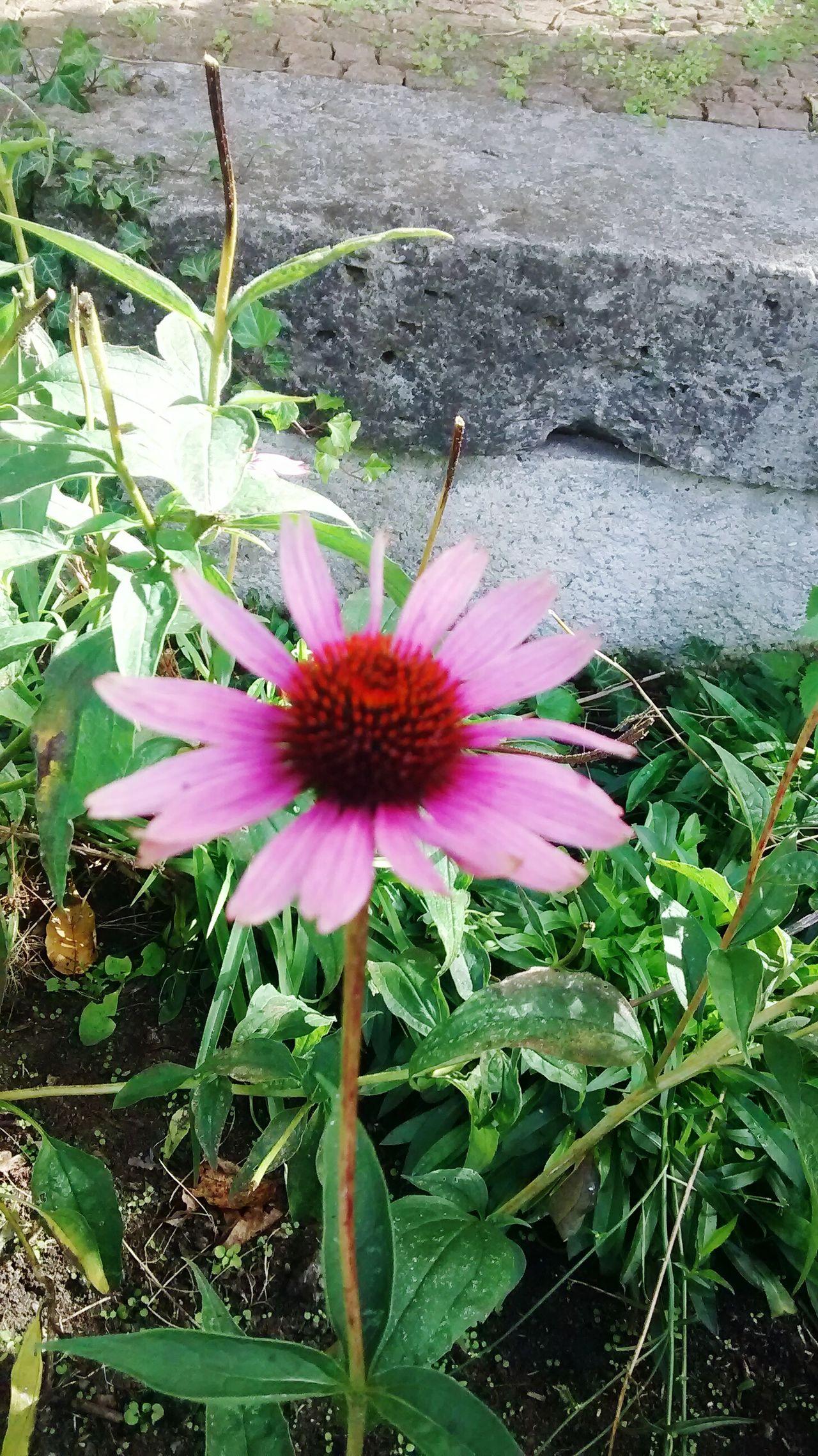 Flowers Plants Last Breath Of Summer Life Rosengarten,Tierpark