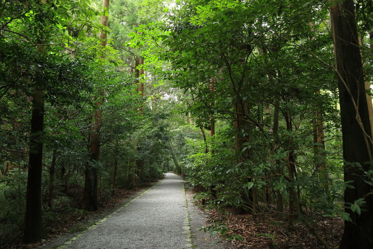 EyeEm Gallery Nature Photography Path Shrine Shrine Of Japan Beauty In Nature Eyeem Photography Forest Growth Nature Nature_collection Outdoors Road Approaching A Shrine The Way Forward Tranquility Tree 伊勢神宮 参道