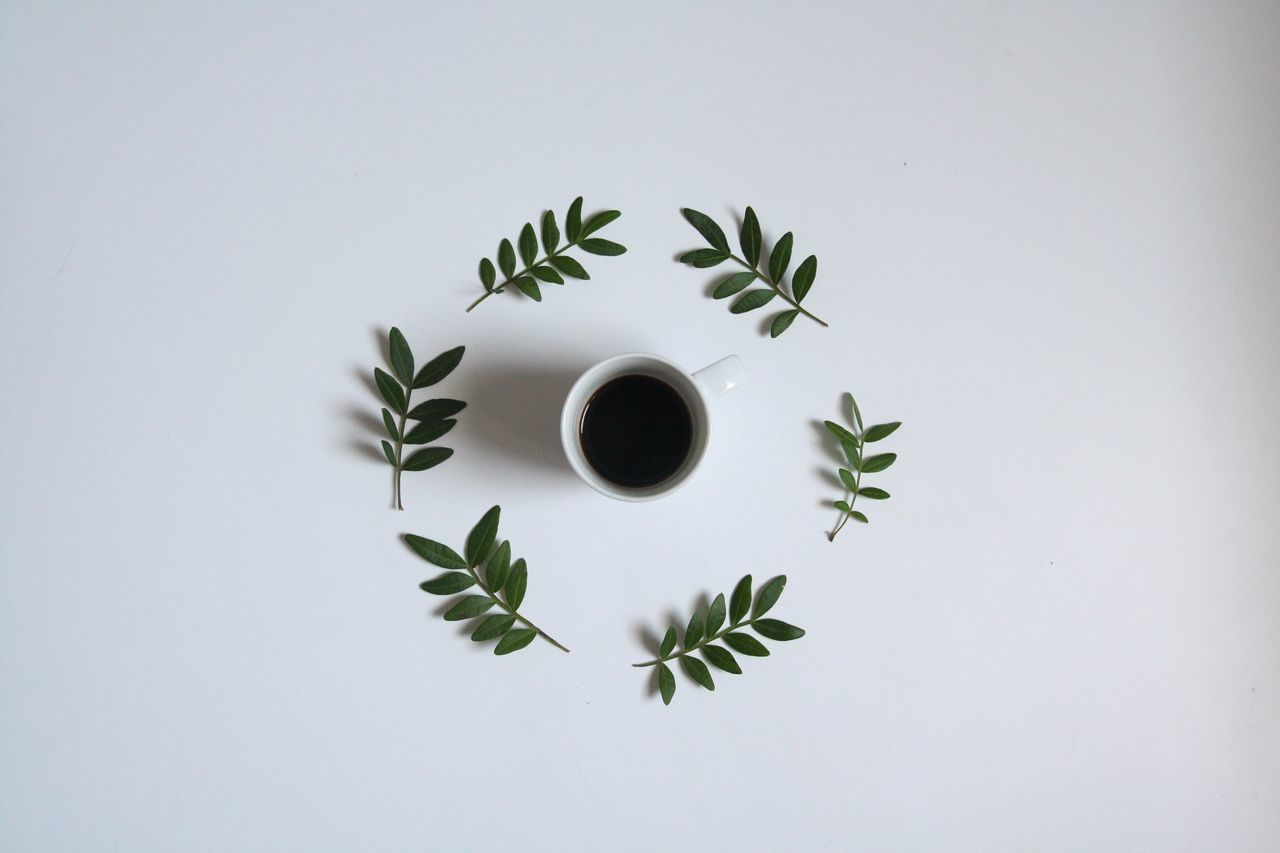 Coffee Still Life Simplicity Leaf Directly Above Coffee Cup No People Freshness High Angle View Food And Drink White Background Drink Table Overhead View Indoors  Close-up Day