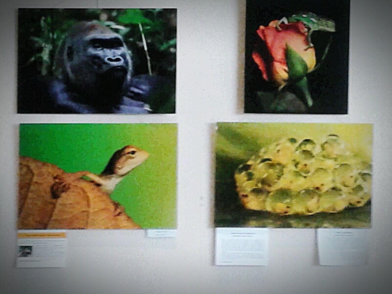 фотографии вокруг нас 2014 ходила на выставку в 2014 году Exbititon была в полном восторге воспоминания