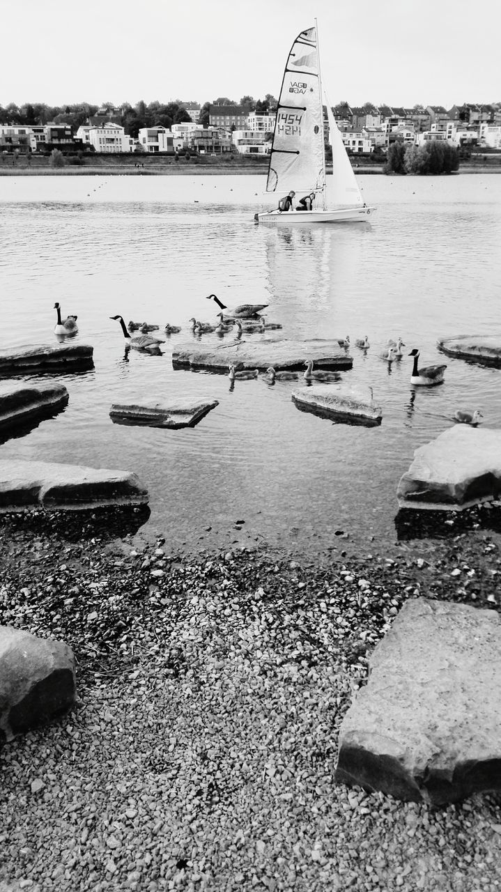 water, day, sea, nature, outdoors, animals in the wild, built structure, bird, large group of animals, architecture, beauty in nature, animal themes, sky, large group of people, real people, swimming, nautical vessel, swan, people